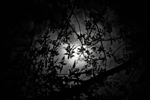 the-moonlight-939525_1920